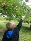 N Picking Apple