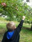 N Picking Apple